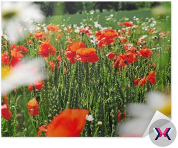 Wiosna łąka kwiaty