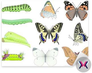 Caterpillar i motyl