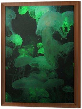Przezroczyste meduzy - zielony