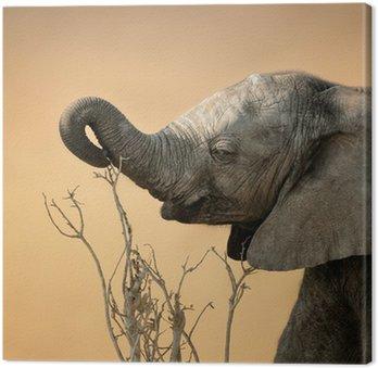 Baby Elephant sięgając gałęzi
