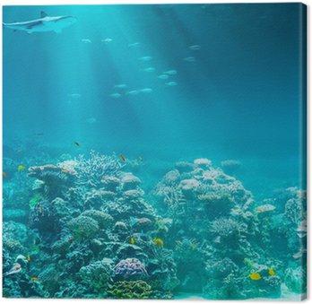 Morze lub ocean podwodna rafa koralowa z rekina