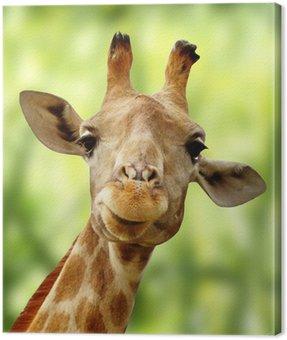Żyrafa z przodu zielony krajobraz