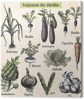 Warzywa ogrodowe