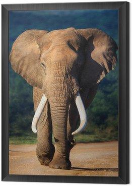 Słoń zbliża