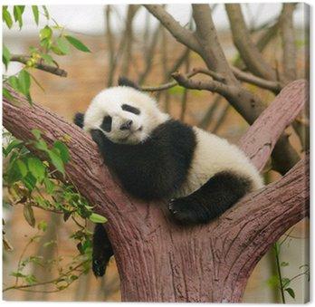 Panda dziecko śpi