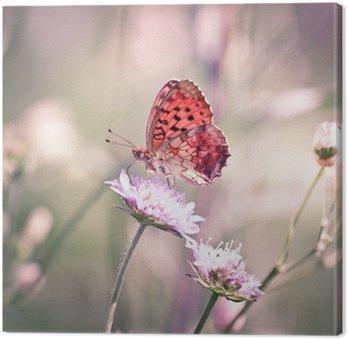 Motyl na Dziki kwiat