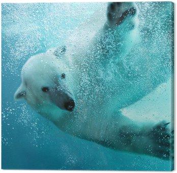 Atak niedźwiedzia polarnego pod wodą