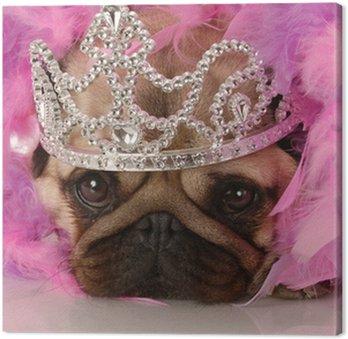 Zepsute pies - adorable Mops ubrani jak księżniczka