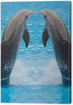 Delfin bliźniaki