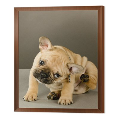 Puppy Adorable Drapanie