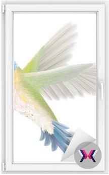 Kolibry na białym tle
