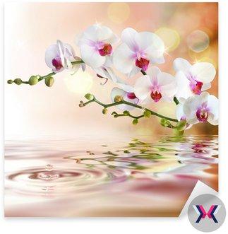 Biały orchidee na wody z kropli