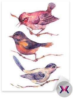 Zestaw kolorowych akwarel ptaki samodzielnie na białym tle