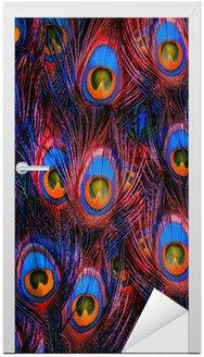 Pawie pióra kolorowe tło