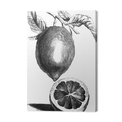 Lemon Tree Vintage obraz