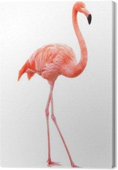 Flamingo chodzenia na białym tle