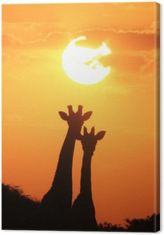 Giraffe - African Wildlife Background - Pair of Gold