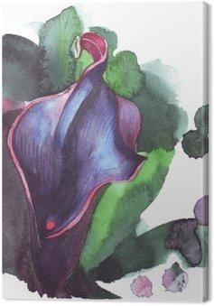 Flower calla watercolor illustration