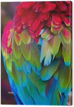 Blue,red and green macaw feathers