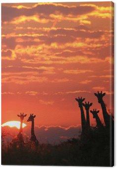 Giraffe - African Wildlife Background - Sunset Wonder
