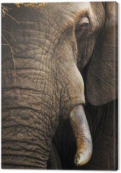 Słoń bliska portret