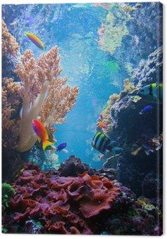 Podwodne sceny z ryby, rafa koralowa