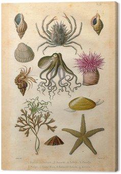 Natural History: Sea Bed