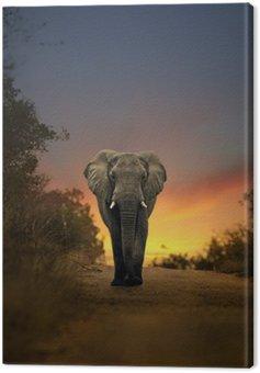 Słoń afrykański spaceru w zachodzie słońca