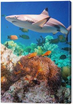 Tropikalna rafa koralowa.