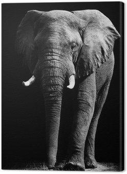 Elephant samodzielnie na czarnym tle