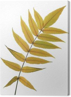 Jesienne liście z jesionu