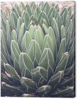 Close up of agave succulent plant, selective focus, toning