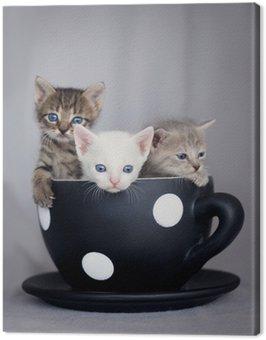 Trzy kociaki siedzi w dużym kubku