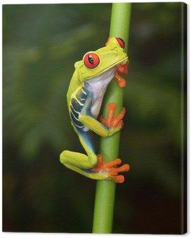 Czerwony eyed drzewa żaba na oddział, Cahuita, Kostaryka