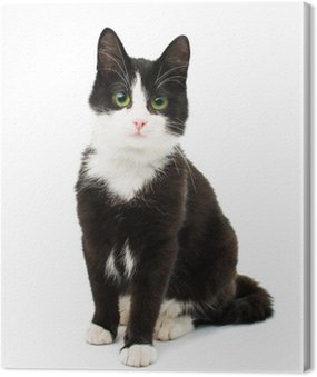 Czarno-biały kot