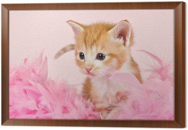 Różowe pióra otaczające kociaka Ginder