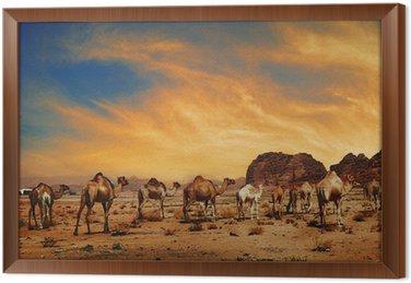 Wielbłądy w Wadi Rum