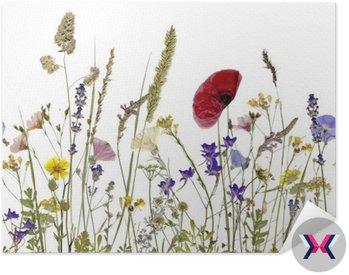 Kwiaty i zioła