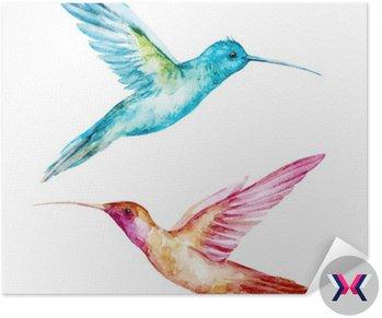 Akwarela Colibri ptak