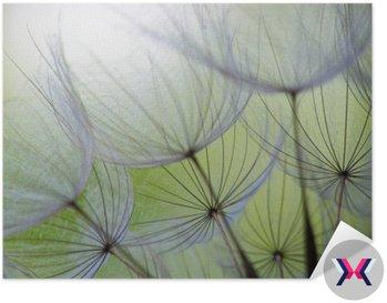 Dandelion nasion