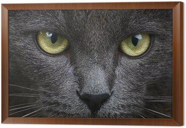 Bliska, Portret szary kotek