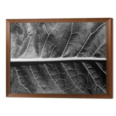 Czarno-biała powierzchnia liści.