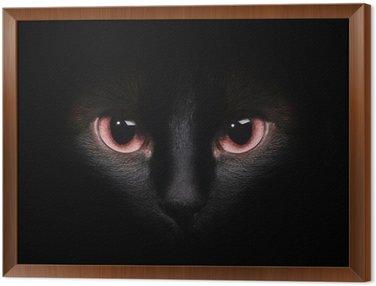 Oczy dzikiego czarnego kot syjamski ukrywa się w ciemnościach