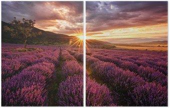 Wspaniały krajobraz z lawendowego pola na wschód słońca
