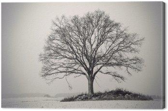 Sylwetka drzewa dębowego