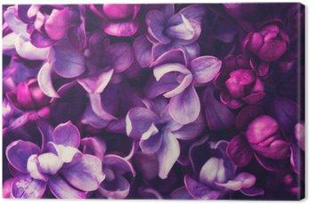Lilac kwiaty w tle