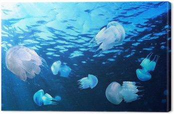 Jellyfishes pływające w wodzie niebieski, Morza Czarnego
