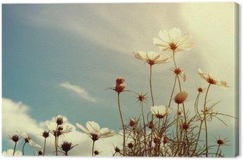 vintage cosmos flower, nature background