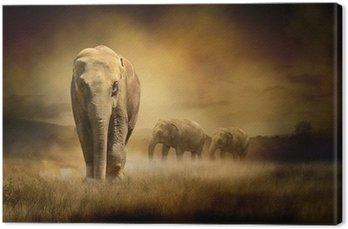 Słonie na zachodzie słońca