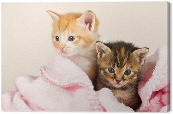 Dwa kociaki w różowym kocem
